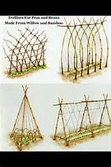 diy trellis designs garden ideas pinterest