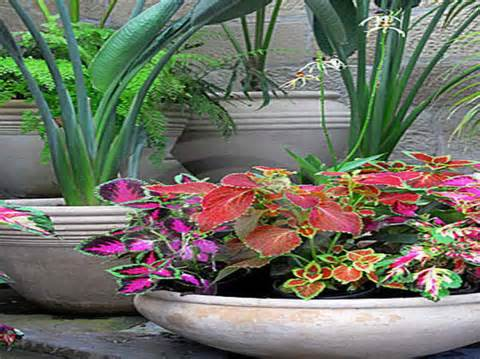 Outdoor Flower Pot Ideas Gallery for flower pot ideas