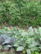vegetable garden | Garden Ideas | Pinterest