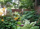 shady woodland garden like this gains a great deal from interesting