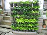 vertical garden soda bottles | Green Garden Ideas | Pinterest