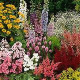 Perennial favorites | Garden ideas | Pinterest