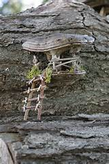 Old Lyme, CT | Fairy Garden ideas | Pinterest