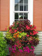 Flowering Plant Windowbox
