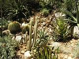 cactus and succulent garden landscaping plants southern california