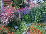 ideas drought tolerant plants tolerant gardens google search