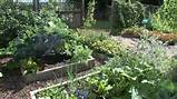 Gardening Tips For Beginners | Easy Ways of Gardening | Advanced ...