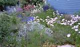 designs gardens landscape design 374 1 0 project by anne hartshorn ...
