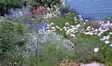 designs gardens landscape design 374 1 0 project by anne hartshorn