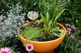 Container water garden ideas | Unseen pictures 4 You