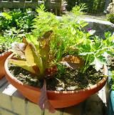 Salad Bowl Garden | Gardening Ideas | Pinterest