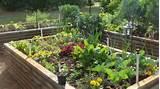 spring gardening | Garden ideas | Pinterest