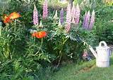 my french country garden your opinion please my french country