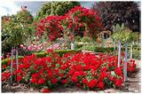 Red Rose Garden Ideas
