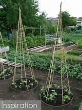 Pinterest Challenge: DIY Bean Teepee Garden Supports | 17 Apart ...