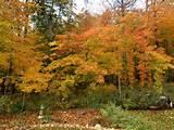 Fall 2013 | Landscaping ideas | Pinterest