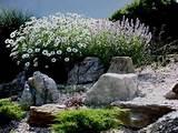 creating beautiful garden with rock garden ideas rhubarb decor