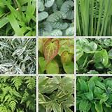 May_Foliage_Mosaic