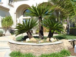 pictures 9 of 14 palm tree landscape design ideas modern for small