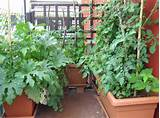 Being An Urban Gardener: Creating A City Vegetable Garden - Gardening ...