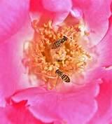 ... Urbana-Champaign Arboretum's Idea Garden . Click/double click image