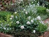 plant a rose and perennial garden landscaping ideas and hardscape