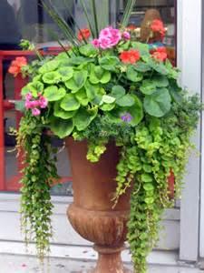 Tundra Monkey Gardening: Container Garden Design