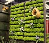 pallet filled with Golden Spikemoss at the Northwest Home and Garden ...