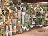 Pin Potted Cactus Garden Ideas on Pinterest