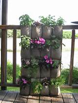 Offshoots: Vertical Gardening on the Cheap