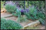 texas hill country xeriscaping xeriscape design drought resistant