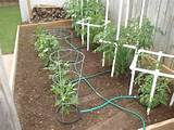 garden irrigation ideas home gardening pinterest