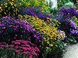 Butterfly Garden | Yard and Garden | Pinterest