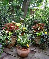 potted plant corner annuals hostas garden pinterest