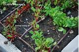 Home Garden Drip Irrigation http://www.pic2fly.com/Drip+Irrigation+For ...