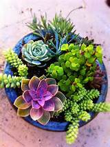 Succulent Container Gardens Satisfy | Outdoor Ideas | Pinterest