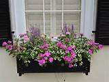 Window box ideas | Gardening, Landscaping & Growing | Pinterest