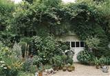 garage with vines and driveway with container garden