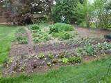 taking stock of the garden s winter losses veggie gardening tips
