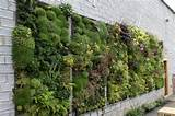 ... DIY Vertical Gardens - Homesthetics - Inspiring ideas for your home