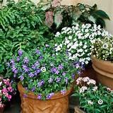 Container-Garden Recipes for Shade
