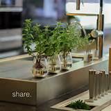Indoor Gardening Gift Ideas