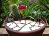Miniature Cactus/Aloe Garden, all the plants like the same soil and ...