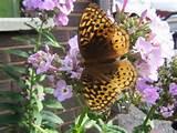 landscaping ideas garden ideas butterfly gardens