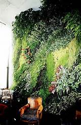 Garden And Lawn , Urban Gardening Ideas : Indoor Urban Home Gardens