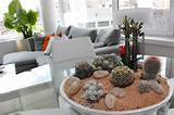 "back Return to ""Tips and Tricks for Using Plants in Modern Interior ..."
