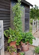 Allen Smith Garden HomeGardens Ideas, Allen Blog, P.Allen Smith ...