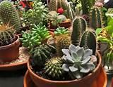 container gardening cactus container garden ideas ideas