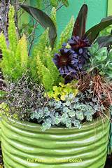 potted plant ideas shade plants shade gardening