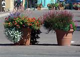 Large Flower Pot Ideas Building ideas
